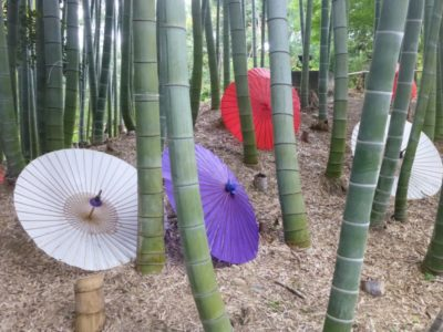 Colorful Japanese umbrellas in the bamboo forest at Kodaiji Temple in Kyoto, Japan