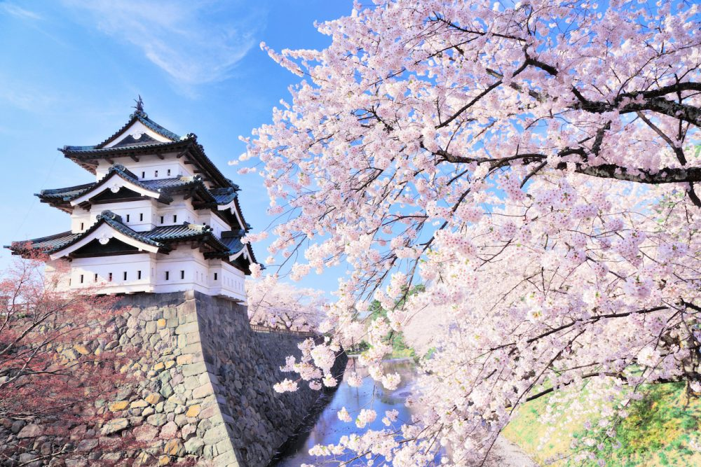 Aizuwakamatsu Castle (Tsuruga Castle) with cherry blossoms in Tohoku, Japan