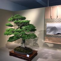 Bonsai in Japan