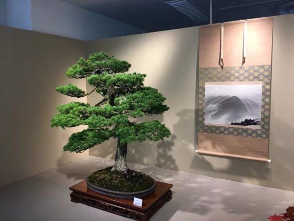 Bonsai tree in a museum in Japan