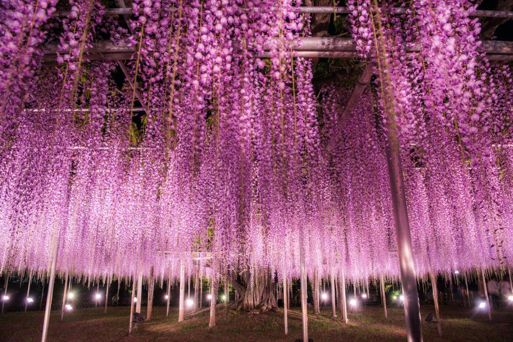 Ashikaga Flower Park by night in Tochigi, Japan