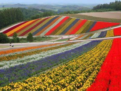 Colorful flower fields in Furano and Biei, Hokkaido, Japan