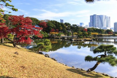 Lake in the Hamarikyu Garden in Tokyo, Japan