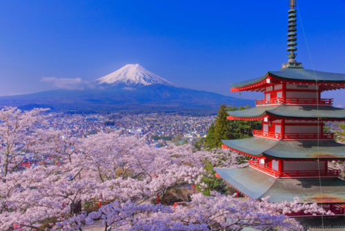 Mt Fuji and Chureito Pagoda with cherry blossoms in spring in Kawaguchiko, Japan