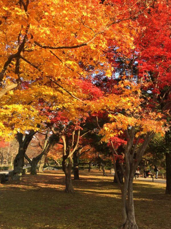 Colorful autumn leaves in the fall season