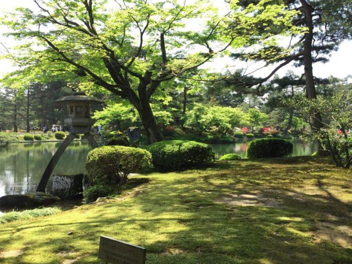 Green in the Kenrokuen garden in Kanazawa, Japan