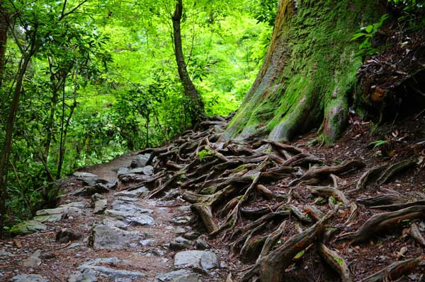 Forest trail on Mt Takao near Tokyo, Japan