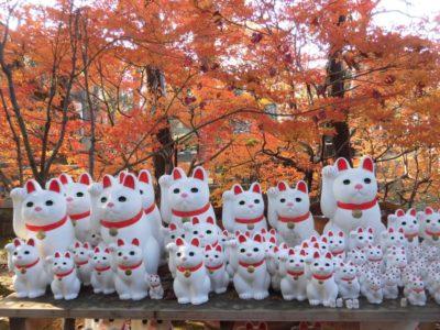 Manekineko cat statues in Gotokuji Temple in Tokyo, Japan