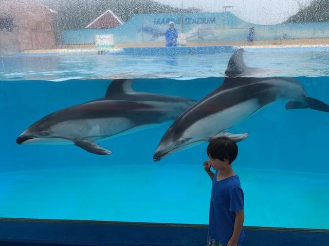 Japan Shimoda aquarium dolphins in Japan