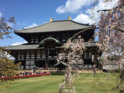 The Todaiji temple in Nara, Japan during cherry blossom season in spring