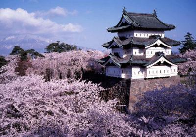 Hirosaki Castle with cherry, Aomori
