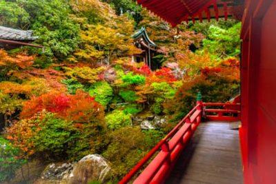Japan Autumn Leaves Tour  Momiji Package (21d/20n)
