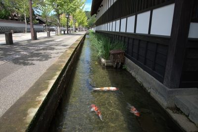 Koi carp in Tsuwano, Shimane, Japan