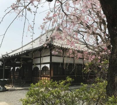 Tokyo Cherry Blossom Walking Day Tour 2022