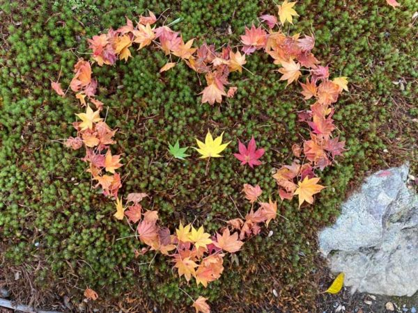 autumn leaves in a heart-shape decoration