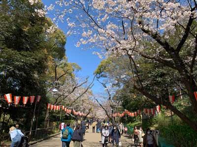 Ueno Park | Tokyo