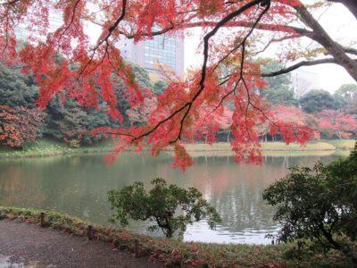 tokyo korakuen in autumn with red leaves